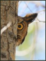 I See You! by EWilloughby