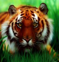 _TigeR_ by Real-Janifer