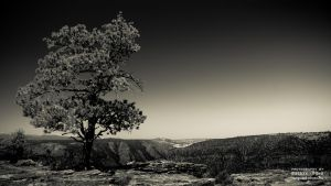 Tree On The Edge by torobala