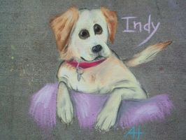 Indy in Chalk by AmmyWolf95