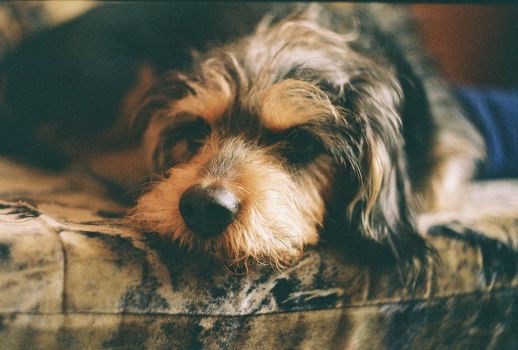 My Dog Zenit ET by coloradobeetle