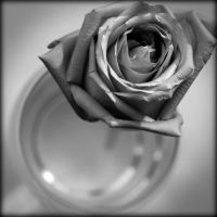 Rose in Glass by scorpiodesign