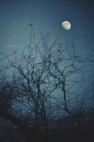 Misty Moon by AlexandrinaAna