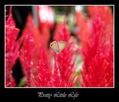 Enhanched Pretty Little Life by EnricoMulyadi