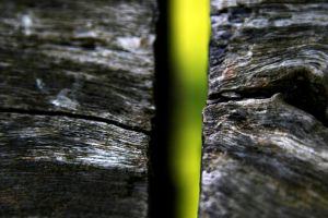 Gap in the Wood by Vendrava