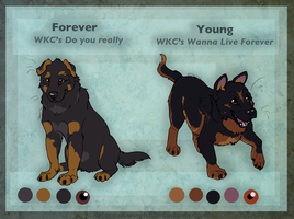 WKC's Forever and YOung by WagginKennelClub