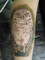 Owl first session by Juliano-Pereira