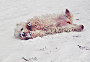 Snow angels, puppy style by WEIGHTOFTHEWALL