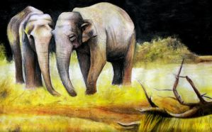 Elephants by tomwright666