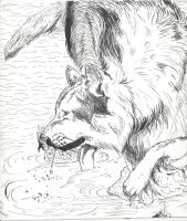 water wolf by Rio-del-Pantera