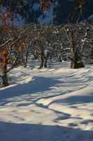 Snow Orchard 2 by FoxStox