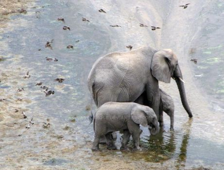 Elephant Mother and Children by CanelaRose