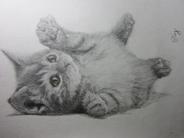 Drawing of Cat by DuyLeto