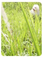 .green green grass. by deWhin