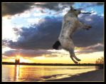 Turbo the Superdog Flys by Sun-Seeker