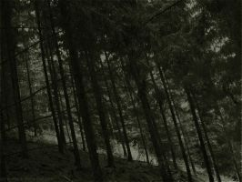 Forest Poetry by Waldeck