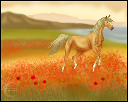 Fields of Poppies by NightimeMare