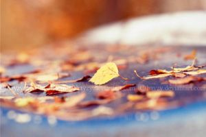 Autumn colors by hayzy