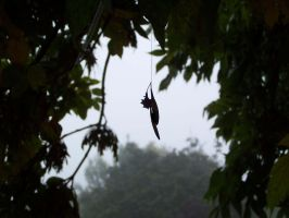 The hanging tree by millie369