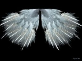 Angel Wings by JacquelineD
