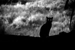 Black Cat of the East by farcry77