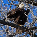 That Eagle Eye by clippercarrillo