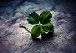 Clover with 5 leaves II by DragonOfLust