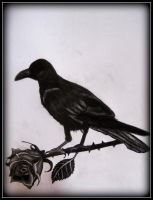 The Raven and the Rose by Akhenaten-Aten