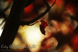 Won't be long before I fall by Nikonfinest