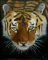 Tiger oil painting by mikebontoft