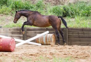 KM Old TB showjump side view by Chunga-Stock