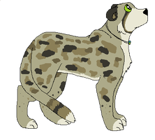 Single Leopard/Cheetah Adopt [TAKEN] by Siberi