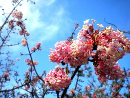 Spring is Here by musicismylife2010