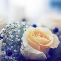 bouquet. by extrasist0le