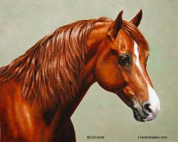 Chestnut Morgan Horse - Flame by ForestWildlifeArt
