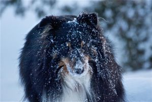 snowy dog by jsimon526