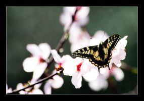 Almost spring... by geko78