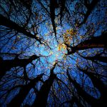 Inside The Mind of a Tree II by JonGoldie