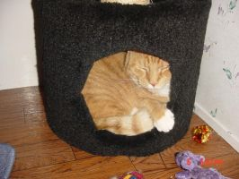 I can fit yup by queenofcats81
