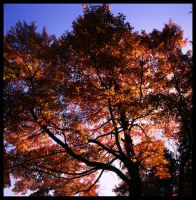 Colours of Michigan 4 by ChristopherSacry