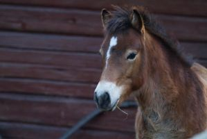 Young Horse by JRL5
