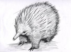 Echidna_20 by GraphicDensity