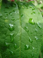 leef with rain by theDevineartist