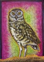 ACEO - Burrowing Owl by Redwall151