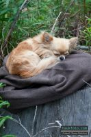 Patric Sleeping On A Fishing Trip by OrisTheDog