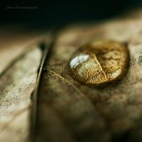 crying leaf III by JoannaRzeznikowska