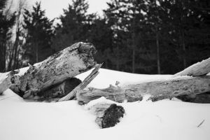Winter Logs by JJTM