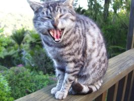 Yawn:stock by Flynn-the-cat