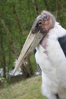 Marabou by lindaatje