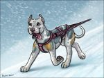 Bobo Cani Cross in the Snow by Bafa